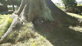 御薬園 (5).jpg